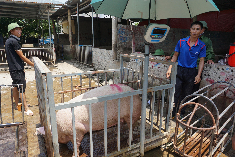 Chợ đầu mối lợn hơi ế ẩm, tiểu thương ngồi đuổi ruồi vì giá quá cao - 9