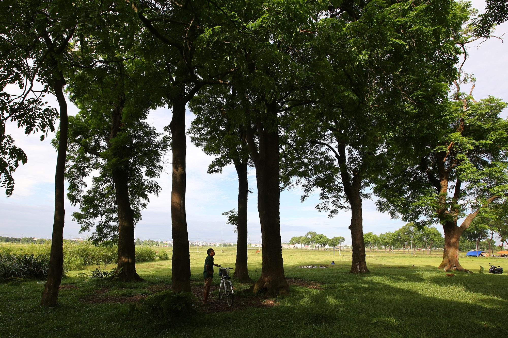Rừng lim xanh cổ thụ hơn nghìn năm tuổi ngay tại Hà Nội - 8
