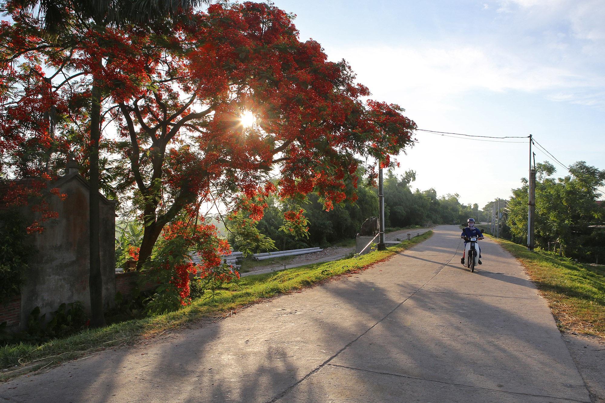 Phong cảnh bình yên nhìn từ những triền đê ở Hà Nội - 6