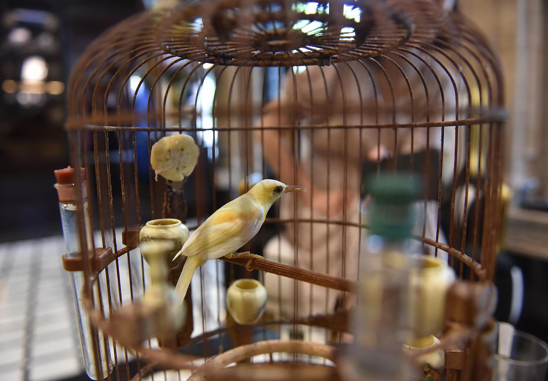 Cận cảnh bộ sưu tập lồng chim đắt đỏ giá 10 tỷ đồng của đại gia Việt - 10