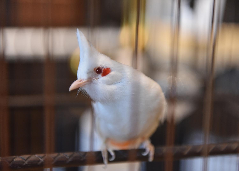 Cận cảnh bộ sưu tập lồng chim đắt đỏ giá 10 tỷ đồng của đại gia Việt - 4