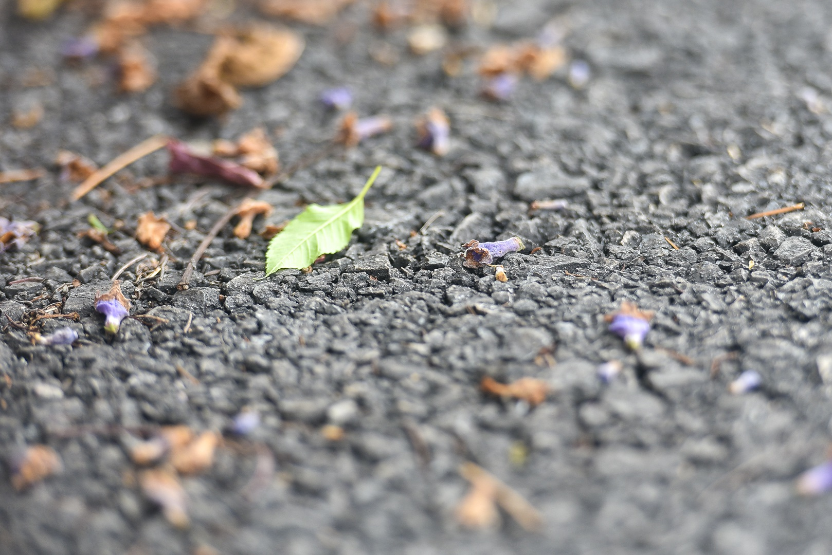 Thổn thức với thức hoa tím khiến người Hà Nội nhớ Đà Lạt - 17
