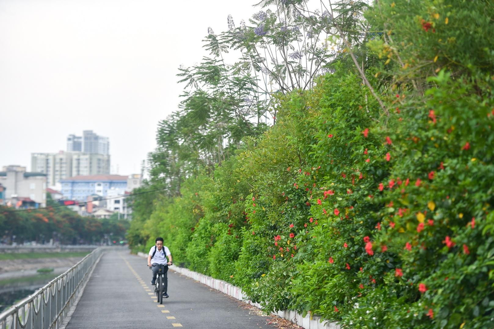 Thổn thức với thức hoa tím khiến người Hà Nội nhớ Đà Lạt - 7