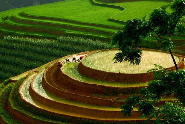 Ngắm ruộng bậc thang Mù Cang Chải đẹp lung linh mùa đổ nước - 3