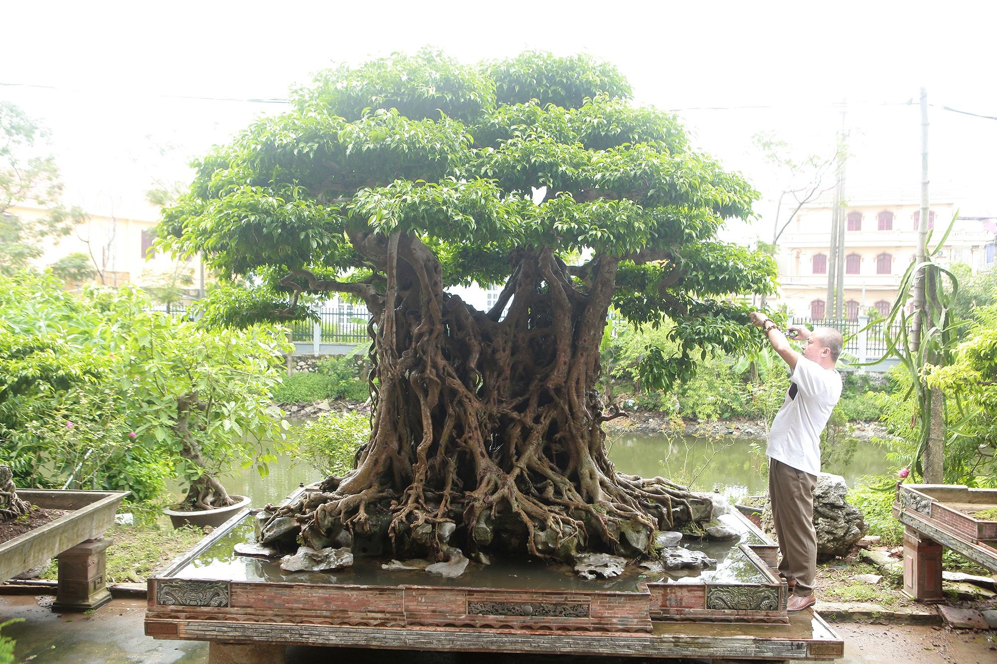 """""""Báu vật ẩn mình"""" có tuổi đời 500 năm ở Hà Nội, trả 100 cây vàng không bán - 2"""
