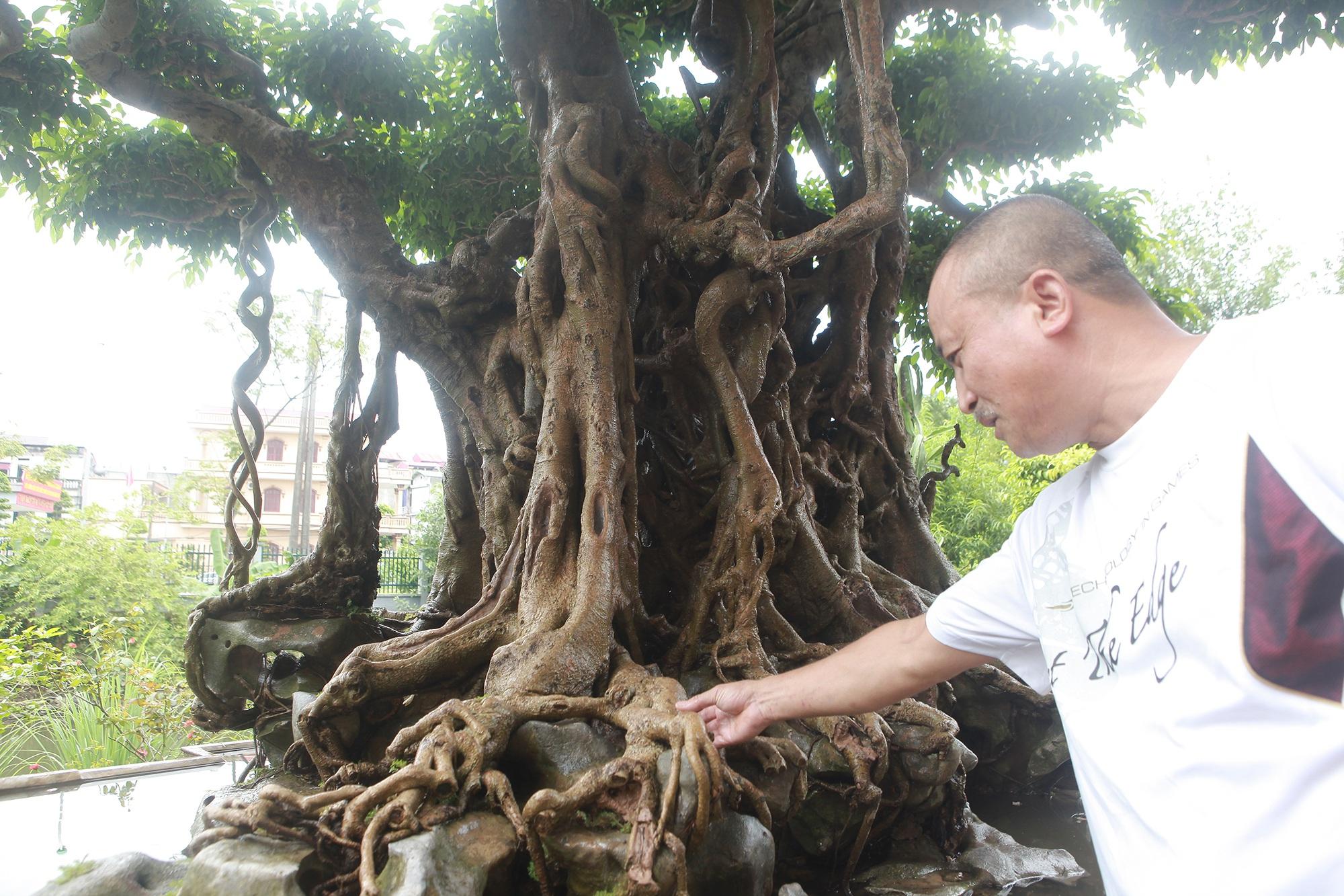 """""""Báu vật ẩn mình"""" có tuổi đời 500 năm ở Hà Nội, trả 100 cây vàng không bán - 3"""