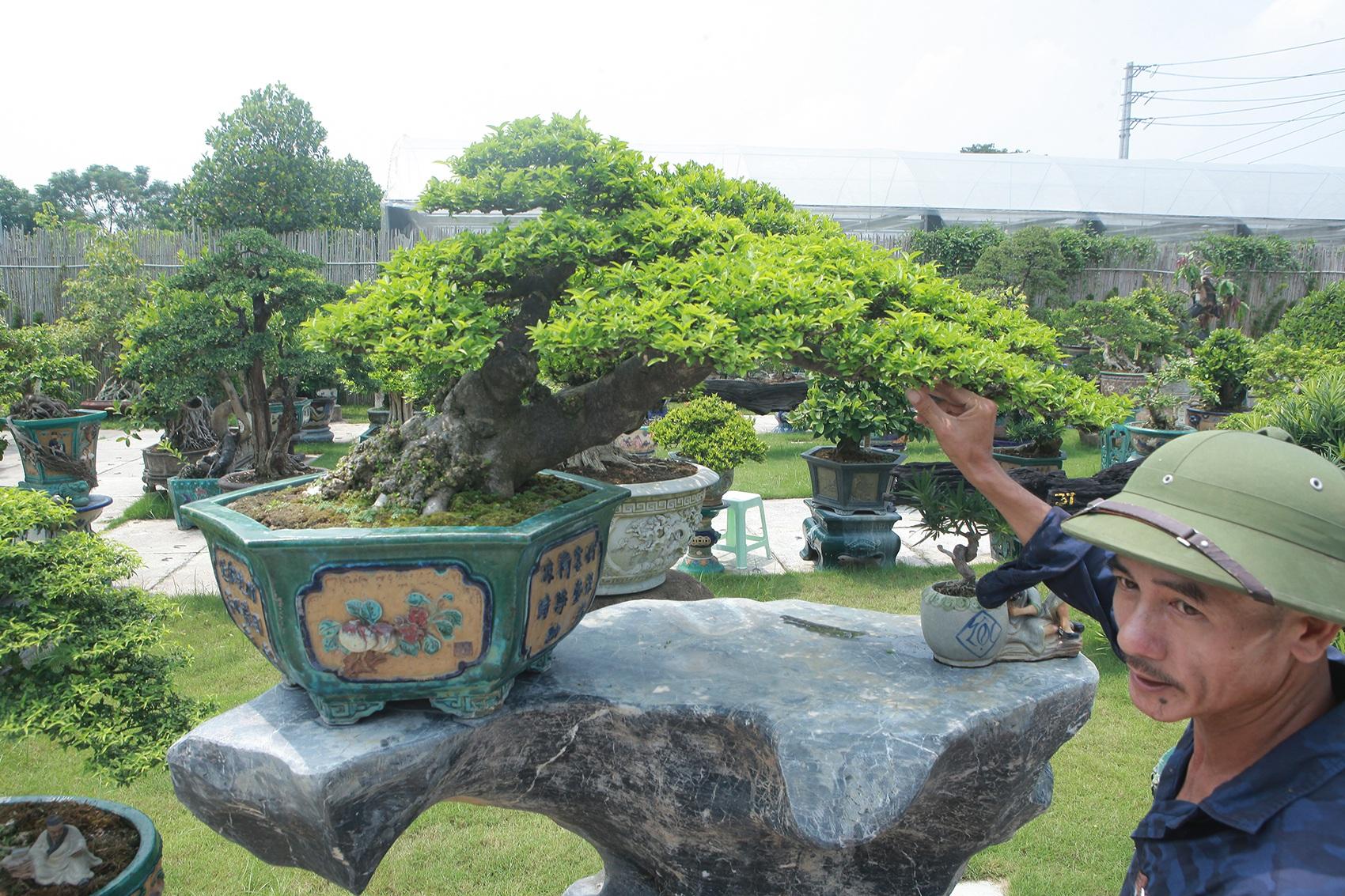 Mục sở thị khu vườn gần 1.000 cây cảnh bonsai hiếm có đất Hà Thành - 7