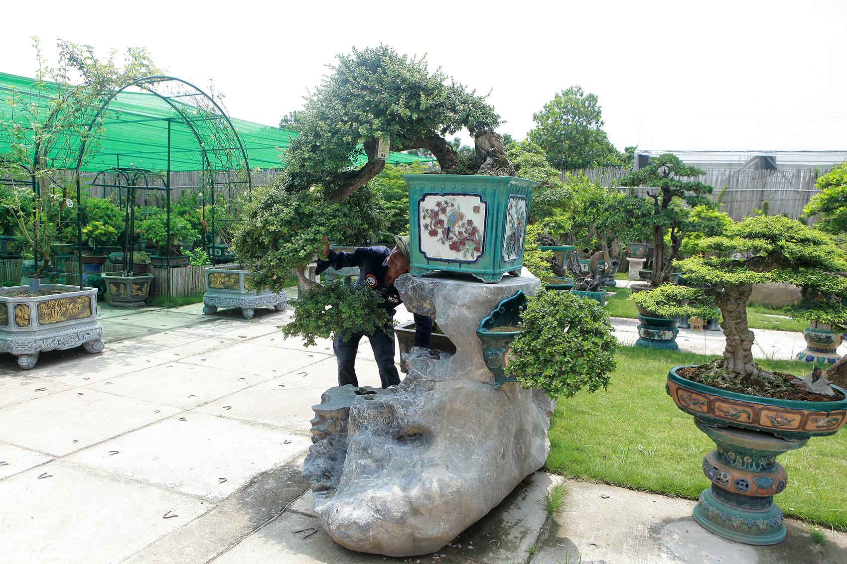 Mục sở thị khu vườn gần 1.000 cây cảnh bonsai hiếm có đất Hà Thành - 8