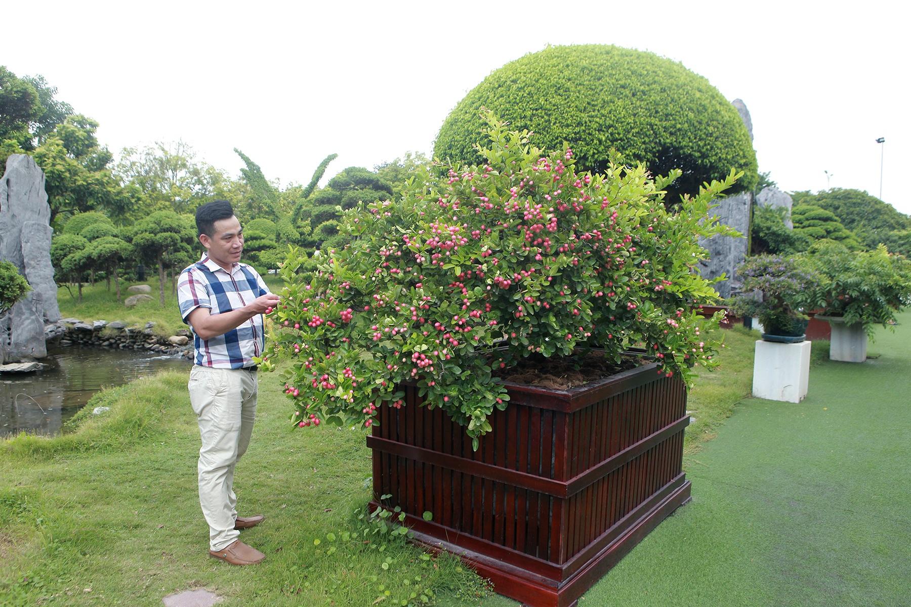 """Dàn sơ ri bonsai cổ thụ, trĩu quả giá tiền tỷ của """"tướng cướp hoàn lương"""" - 7"""