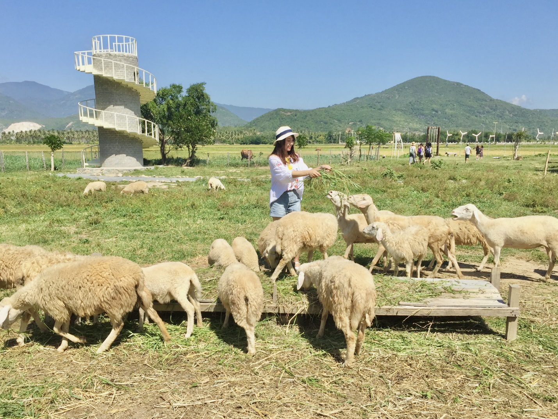 Ninh Thuận - Vùng đất đâu chỉ có nắng và gió - 4