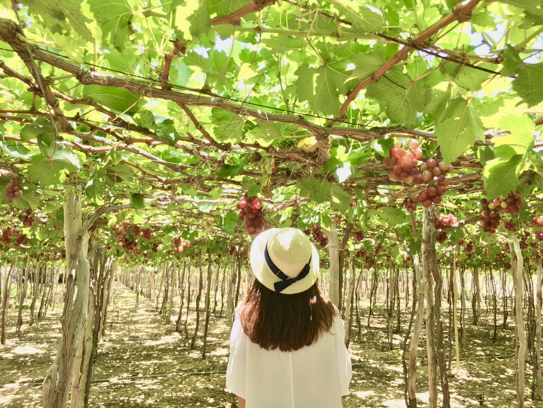 Ninh Thuận - Vùng đất đâu chỉ có nắng và gió - 5