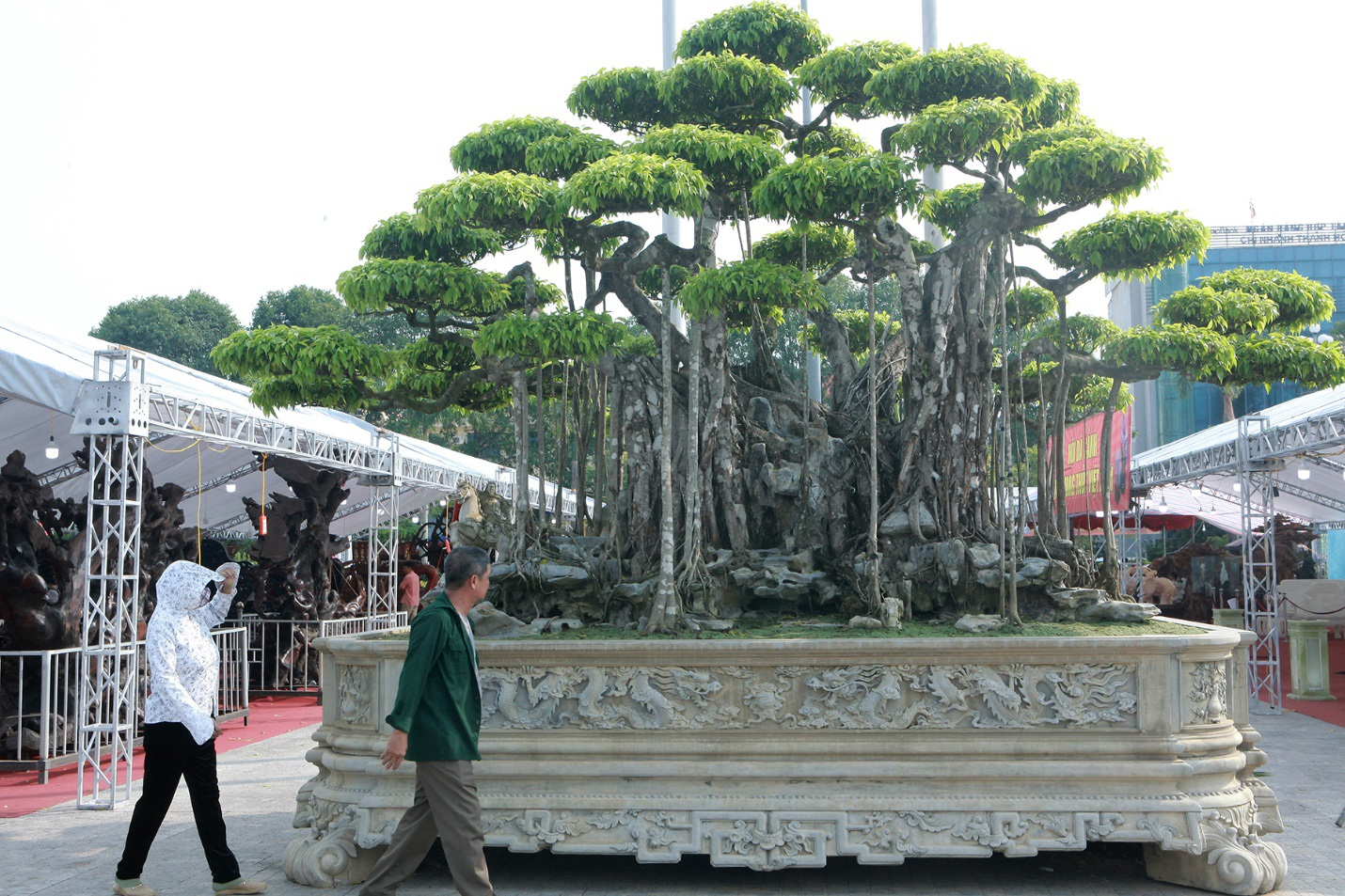 """Ngắm dàn """"siêu cây"""" hàng triệu USD của đại gia xứ Thanh - 1"""