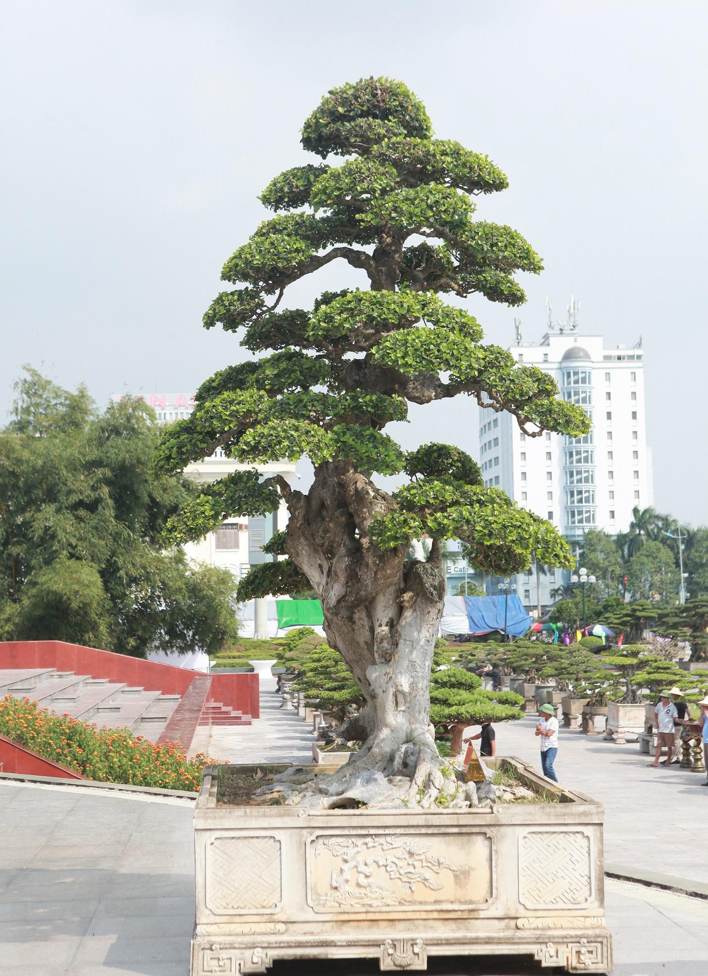 """Ngắm dàn """"siêu cây"""" hàng triệu USD của đại gia xứ Thanh - 8"""