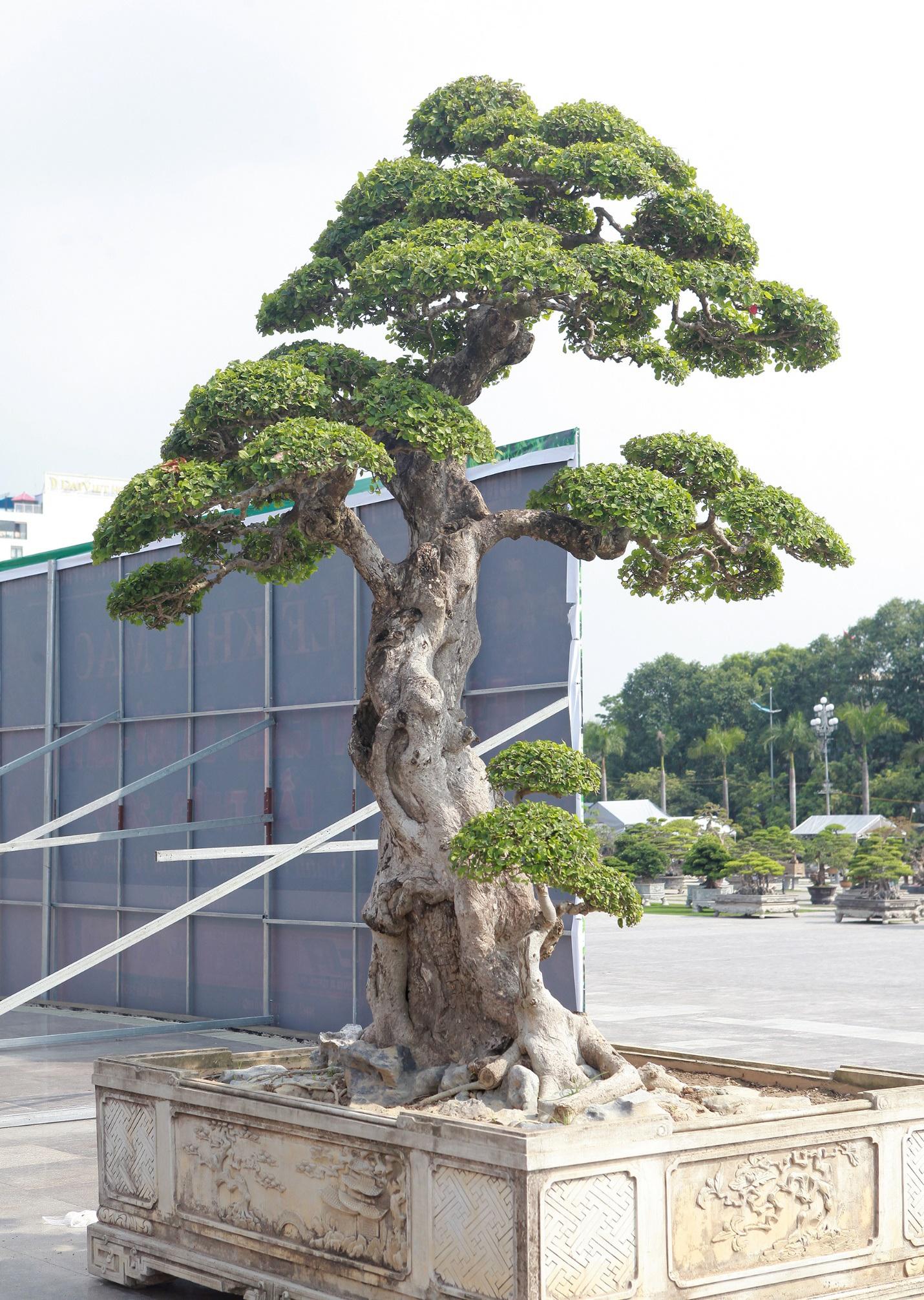 """Ngắm dàn """"siêu cây"""" hàng triệu USD của đại gia xứ Thanh - 9"""