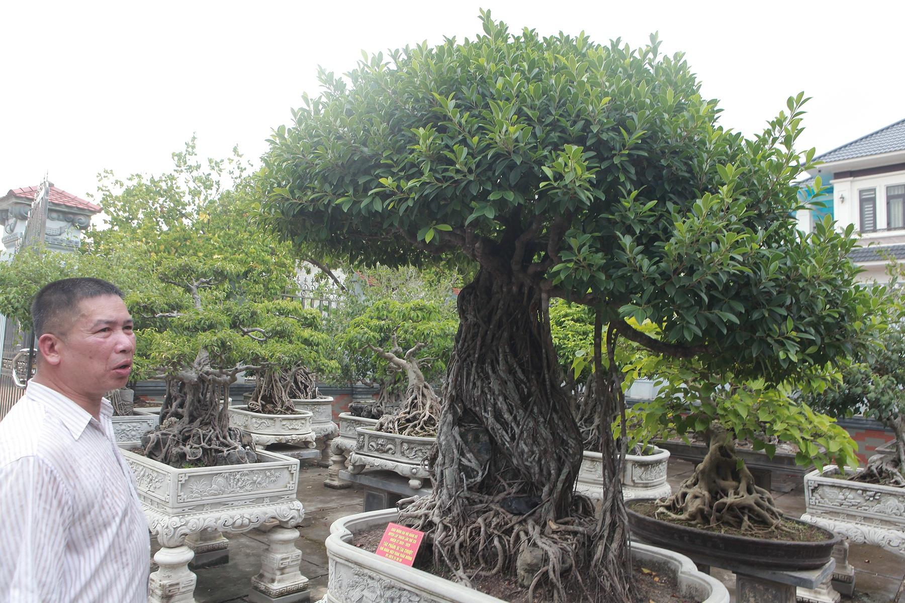 Chiêm ngưỡng bộ ba cây si cổ trị giá chục tỷ đồng của đại gia Vĩnh Phúc - 4