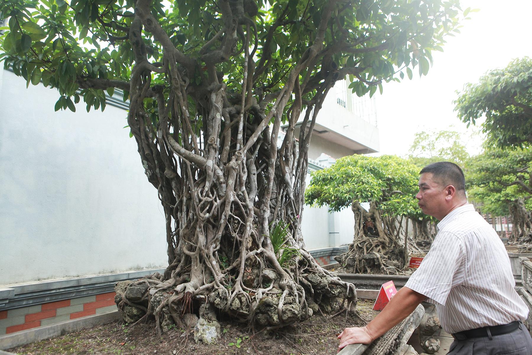 Chiêm ngưỡng bộ ba cây si cổ trị giá chục tỷ đồng của đại gia Vĩnh Phúc - 7