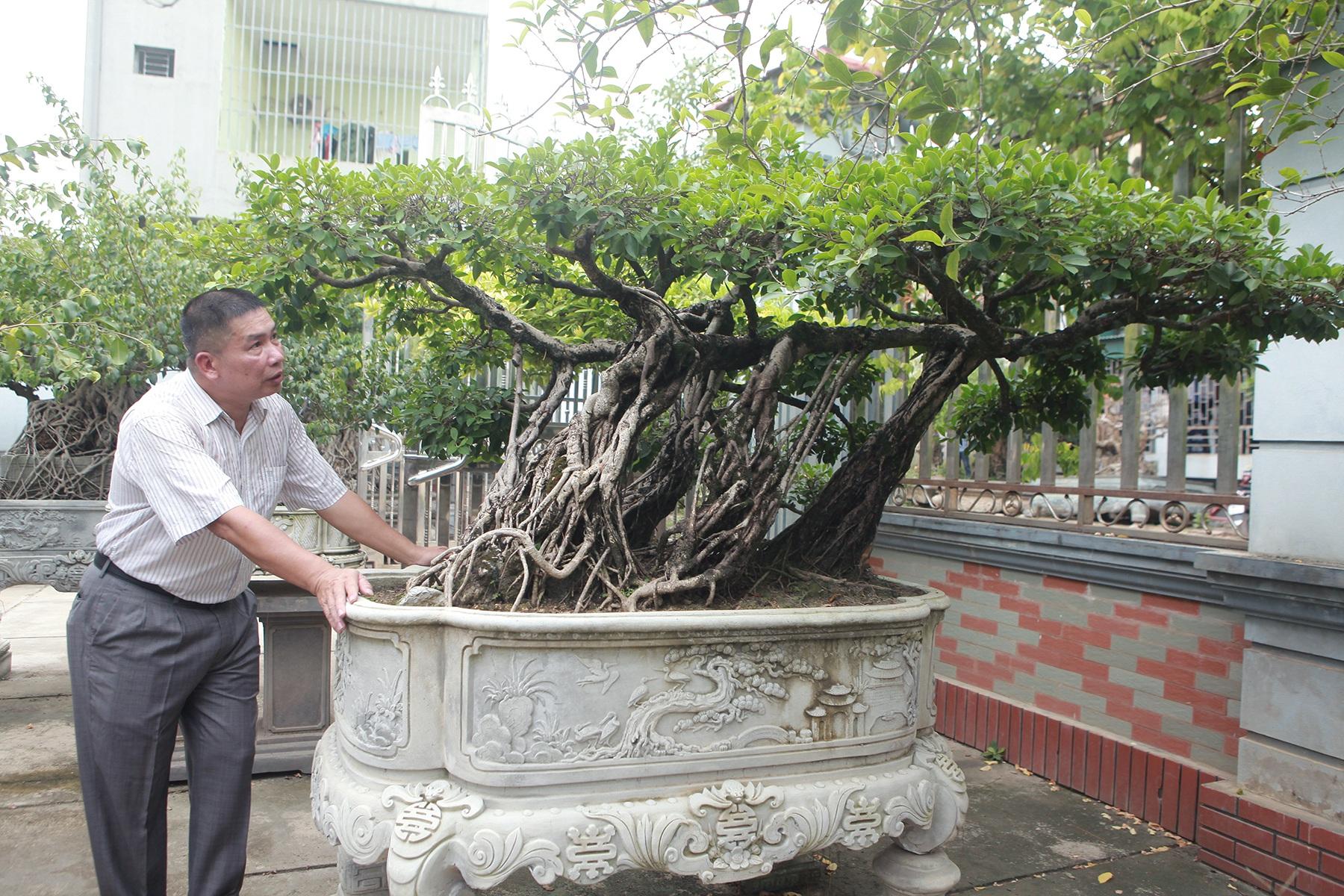 Chiêm ngưỡng bộ ba cây si cổ trị giá chục tỷ đồng của đại gia Vĩnh Phúc - 9
