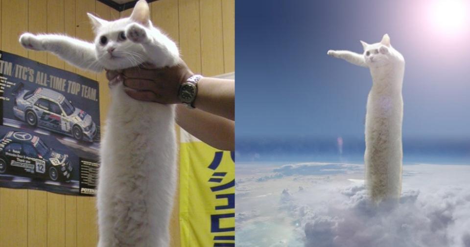 Nobiko - mèo siêu dài nổi tiếng qua đời ở tuổi 18 khiến dân mạng thổn thức - 1