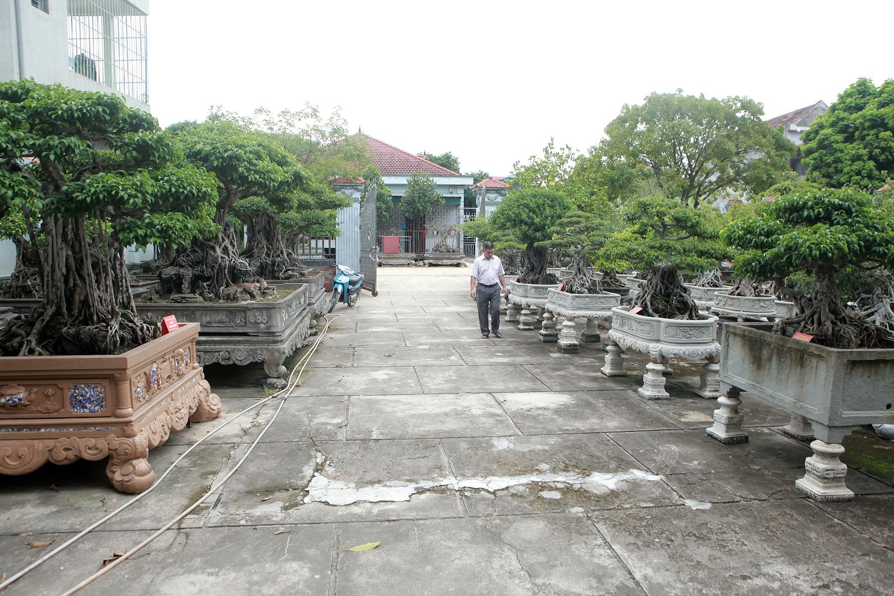 Vườn sanh cổ xứ Huế có giá triệu USD của đại gia Vĩnh Phúc - 1
