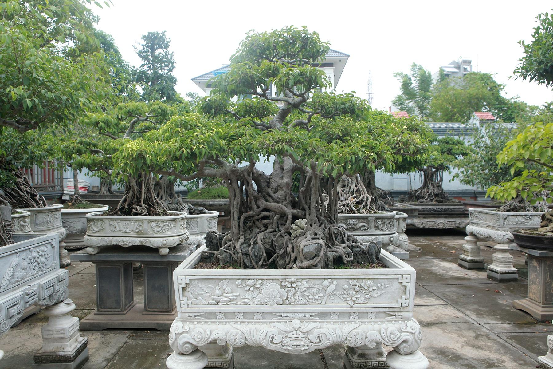 Vườn sanh cổ xứ Huế có giá triệu USD của đại gia Vĩnh Phúc - 12
