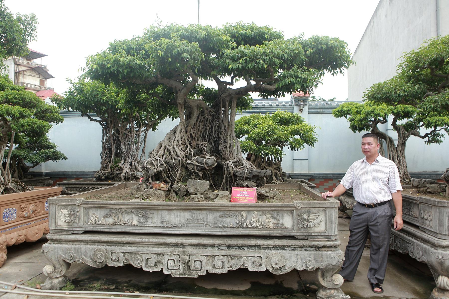 Vườn sanh cổ xứ Huế có giá triệu USD của đại gia Vĩnh Phúc - 4