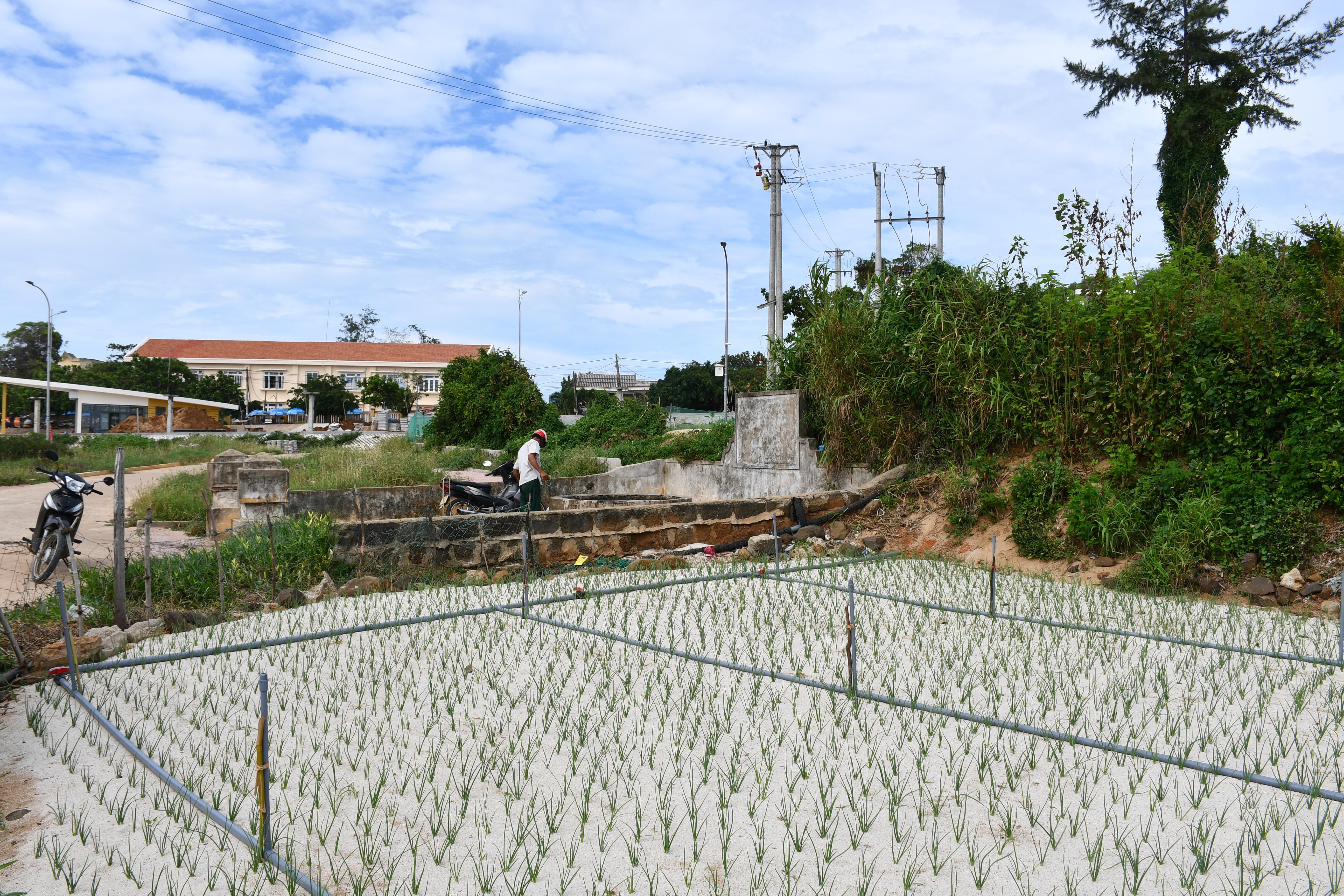Kỳ lạ giếng cổ hàng trăm năm tuổi, quanh năm không cạn nước ở Quảng Ngãi - 4