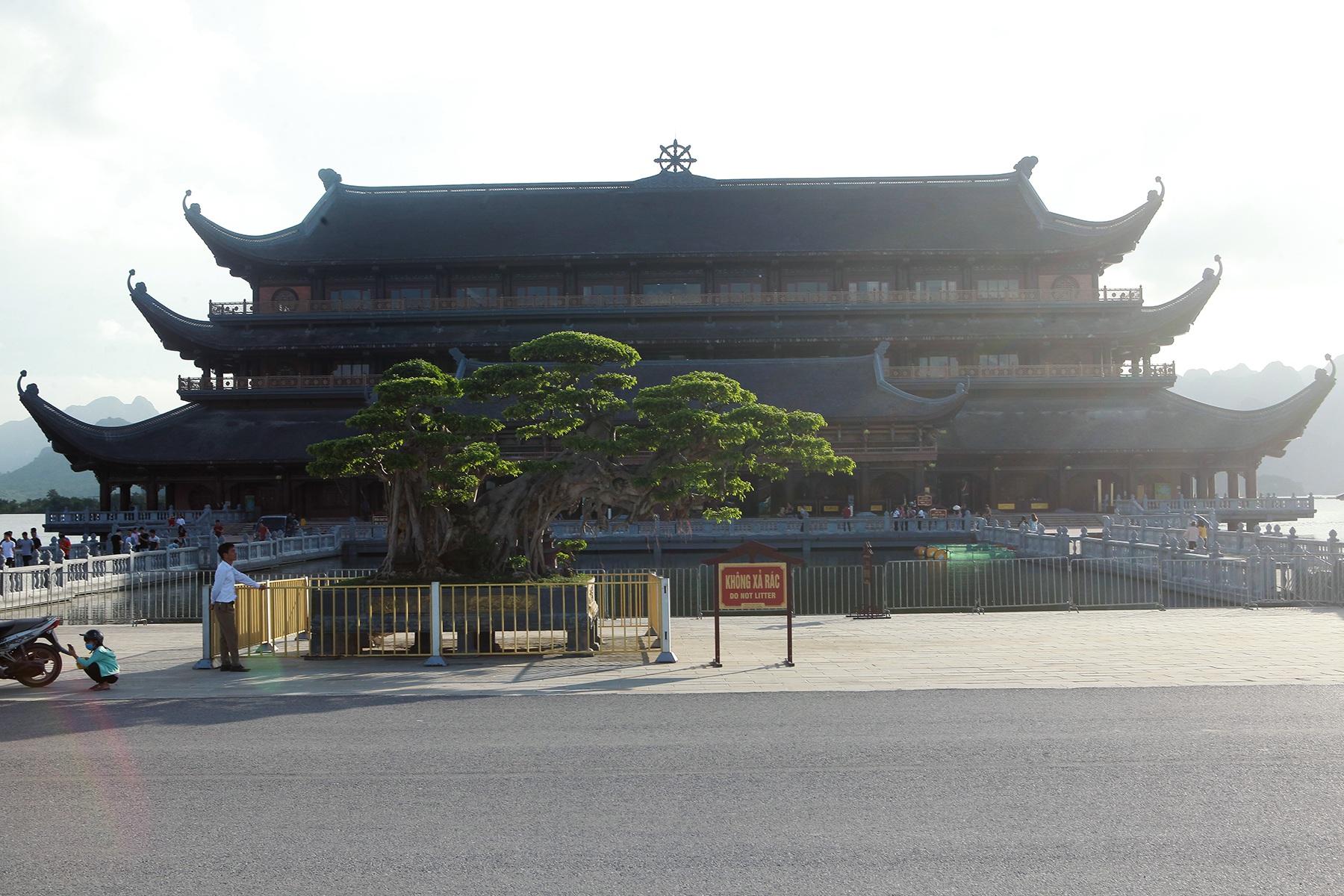 Cây sanh khủng thế nào khiến ông chủ ngôi chùa lớn nhất thế giới mê mẩn? - 1