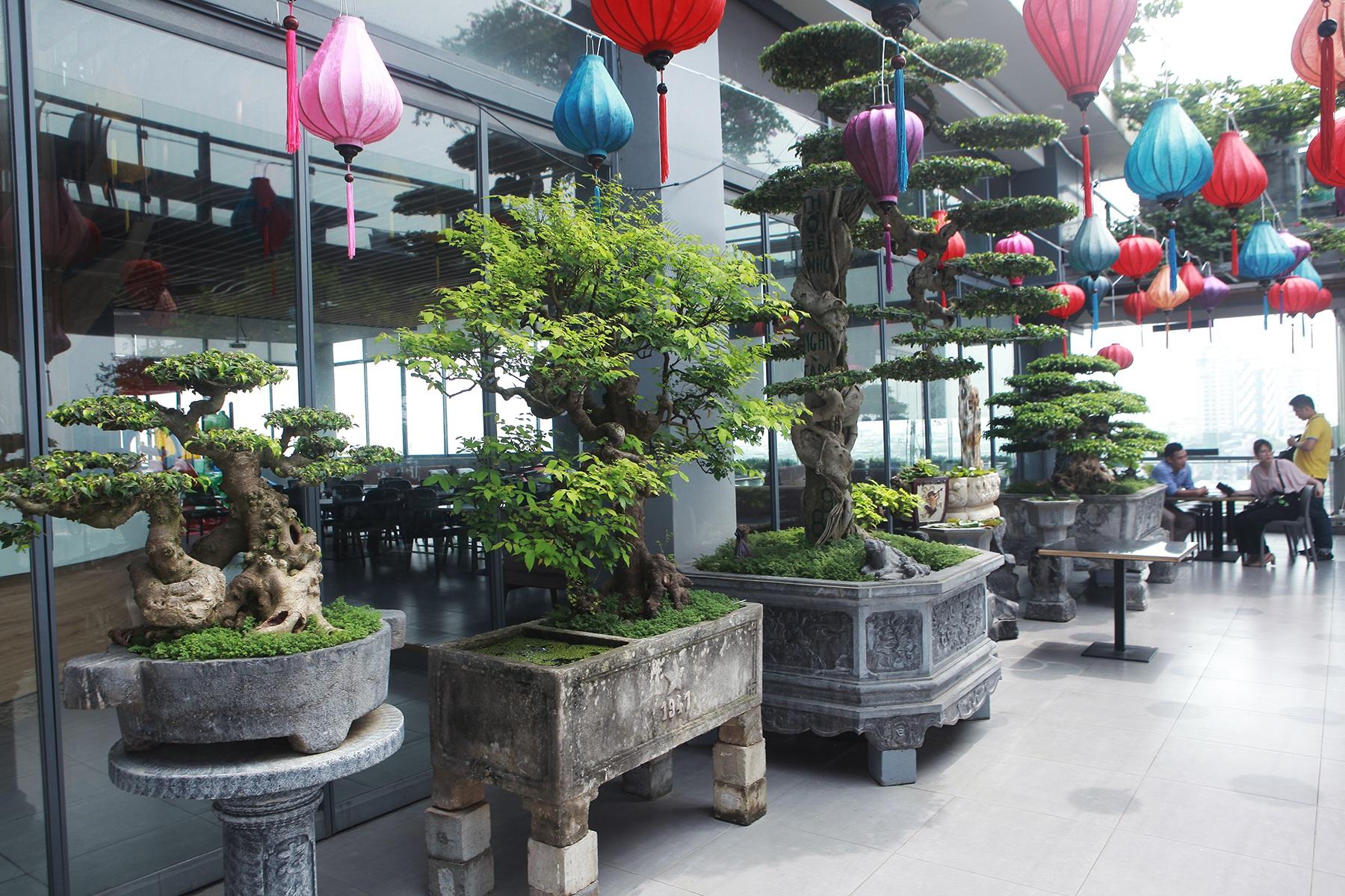 """Mãn nhãn với vườn cây bonsai dáng quái giữa """"lưng chừng trời"""" ở Hà Nội - 10"""