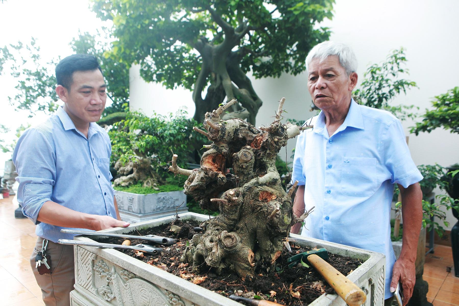 """Mãn nhãn với vườn cây bonsai dáng quái giữa """"lưng chừng trời"""" ở Hà Nội - 12"""