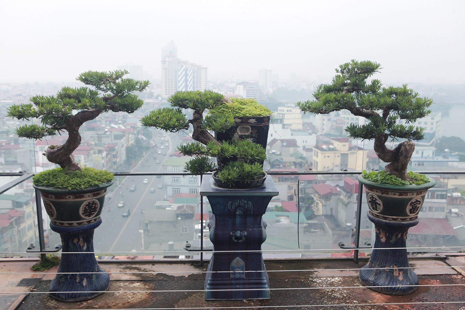 """Mãn nhãn với vườn cây bonsai dáng quái giữa """"lưng chừng trời"""" ở Hà Nội - 4"""