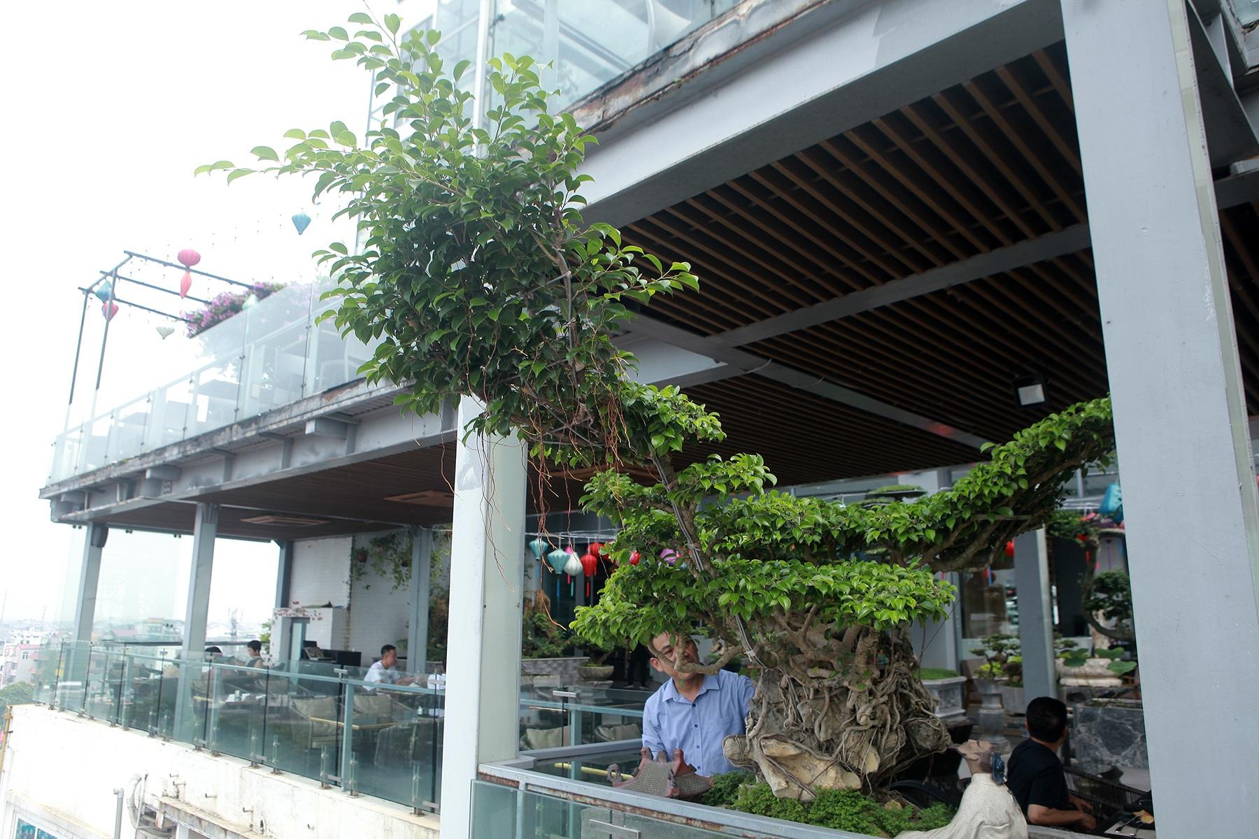 """Mãn nhãn với vườn cây bonsai dáng quái giữa """"lưng chừng trời"""" ở Hà Nội - 9"""