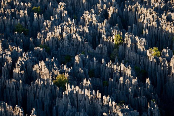 Ớn lạnh khu rừng đá sắc như lưỡi dao – nơi hiểm trở bậc nhất thế giới - 2