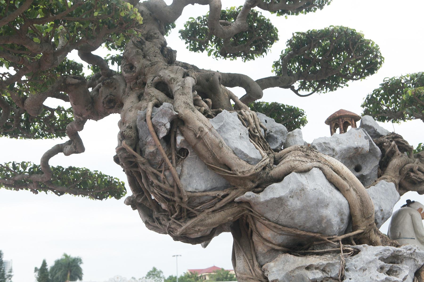 Ngỡ ngàng với huyền thoại sanh cổ ký đá kỳ vĩ nhất Việt Nam - 8
