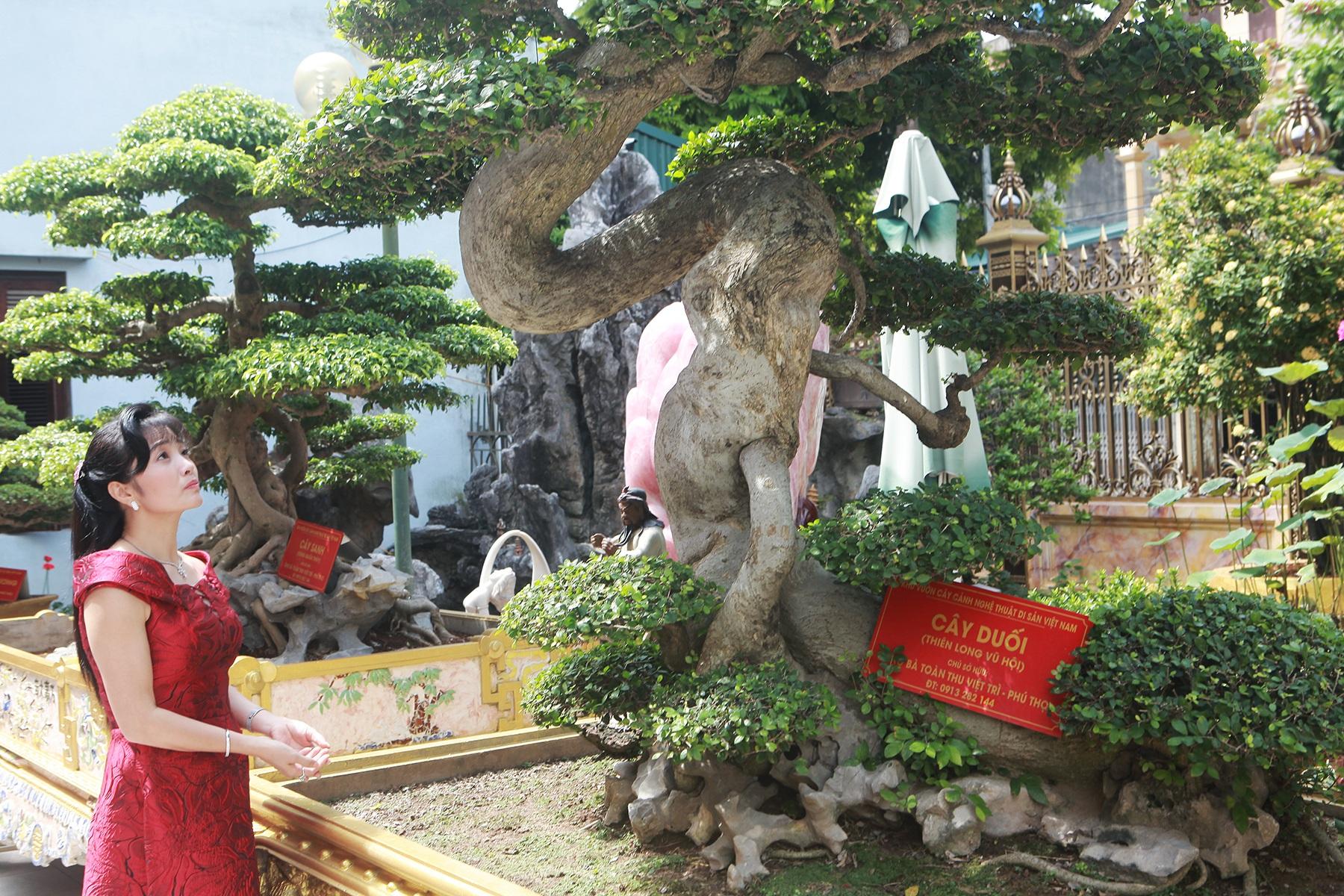 Chiêm ngưỡng cây duối cổ độc nhất vô nhị, trả giá 14 tỷ đồng không bán - 4