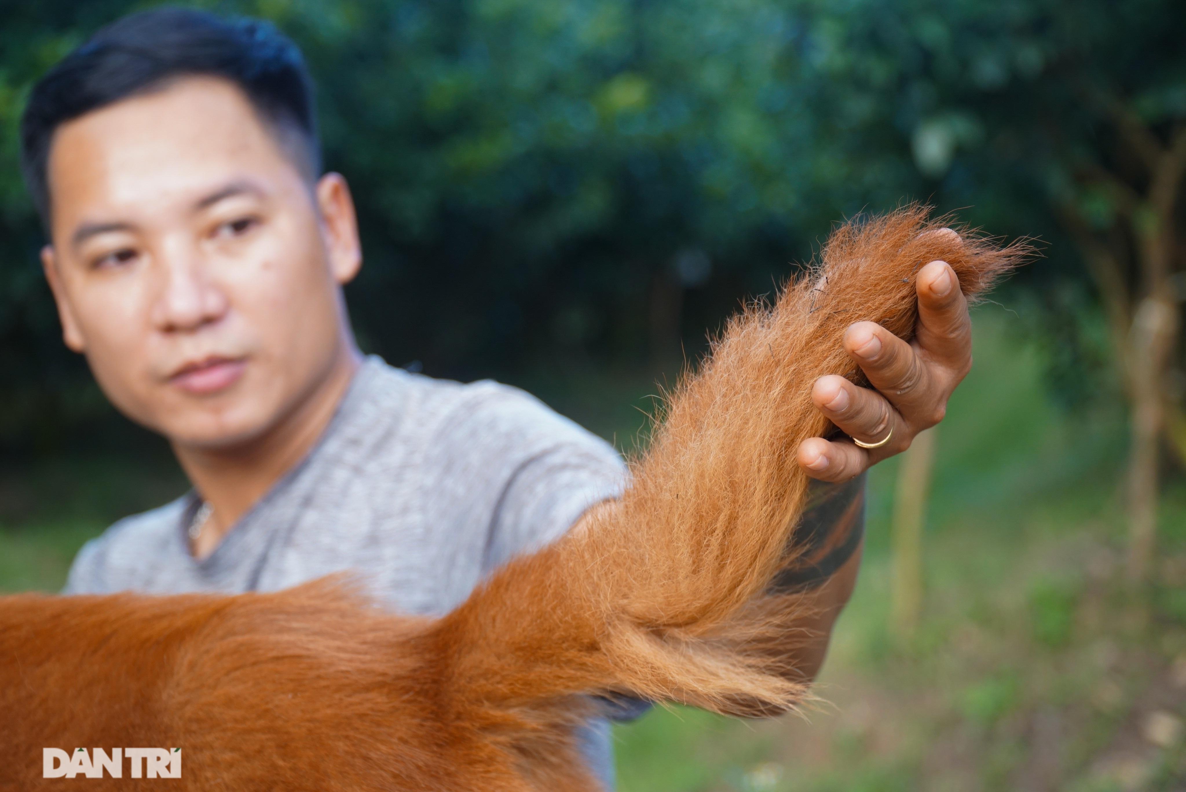 Hồi sinh giống chó săn cổ quý hiếm lừng danh đất Việt - 9