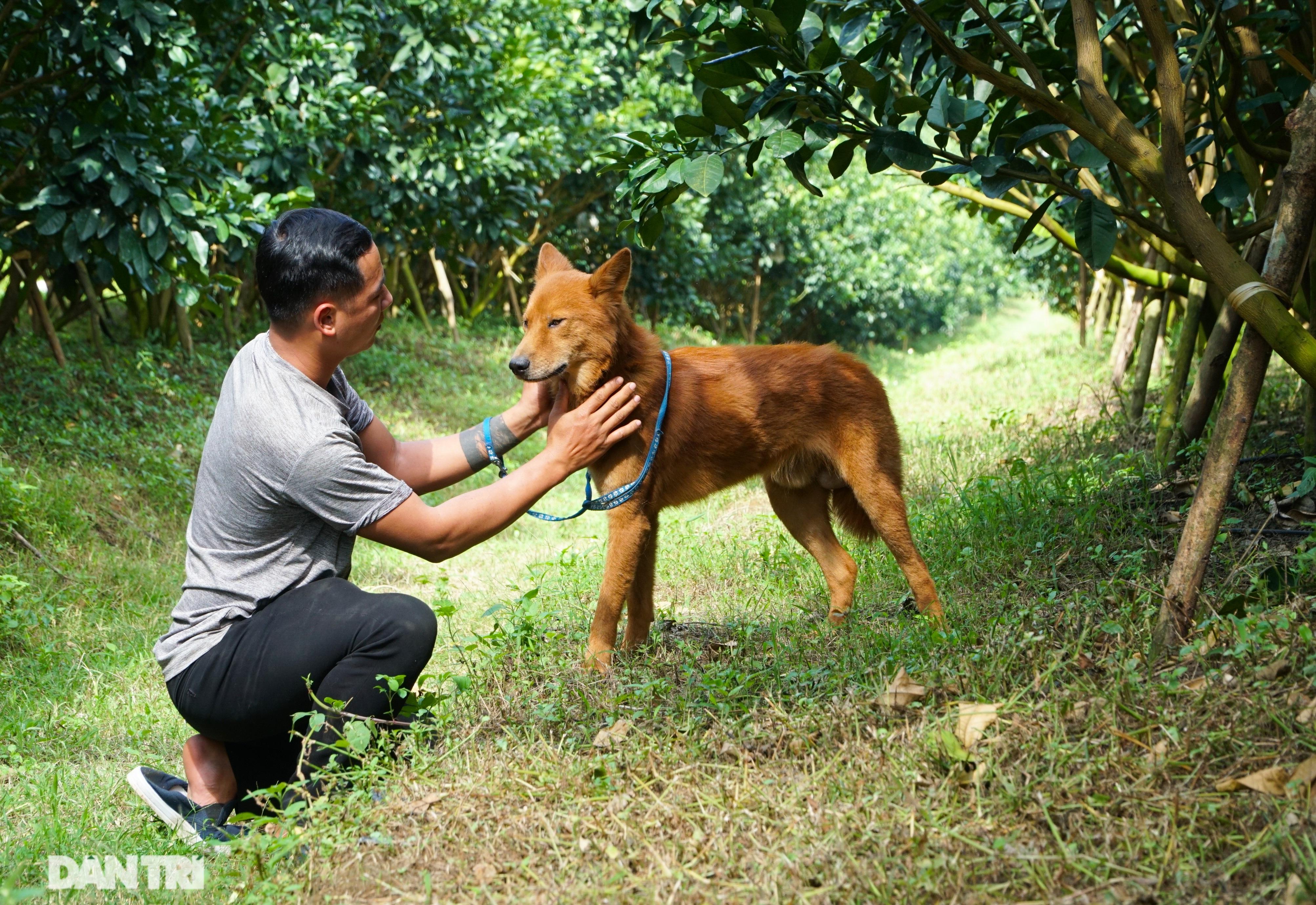 Hồi sinh giống chó săn cổ quý hiếm lừng danh đất Việt - 2