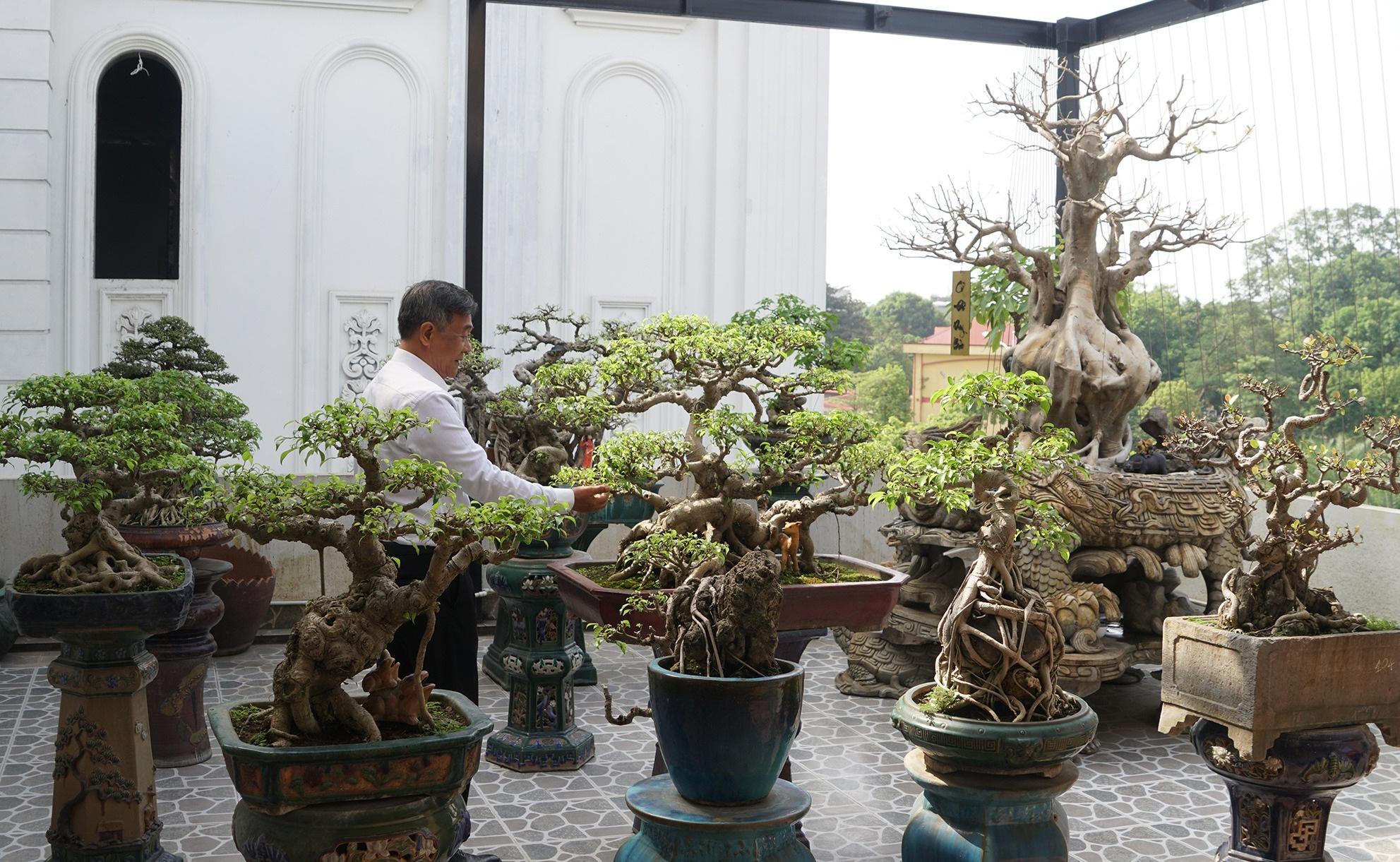 Đại gia chi gần 10 tỷ đồng mua cây cảnh đặt trên sân thượng ngắm mỗi ngày - 1
