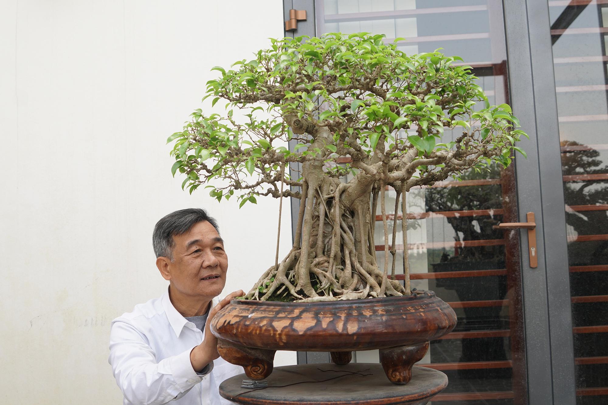 Đại gia chi gần 10 tỷ đồng mua cây cảnh đặt trên sân thượng ngắm mỗi ngày - 8