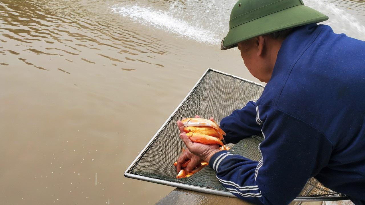 Tết ông Công, ông Táo: Người nuôi cá chép nhận đặt cọc hàng trăm triệu đồng - 10
