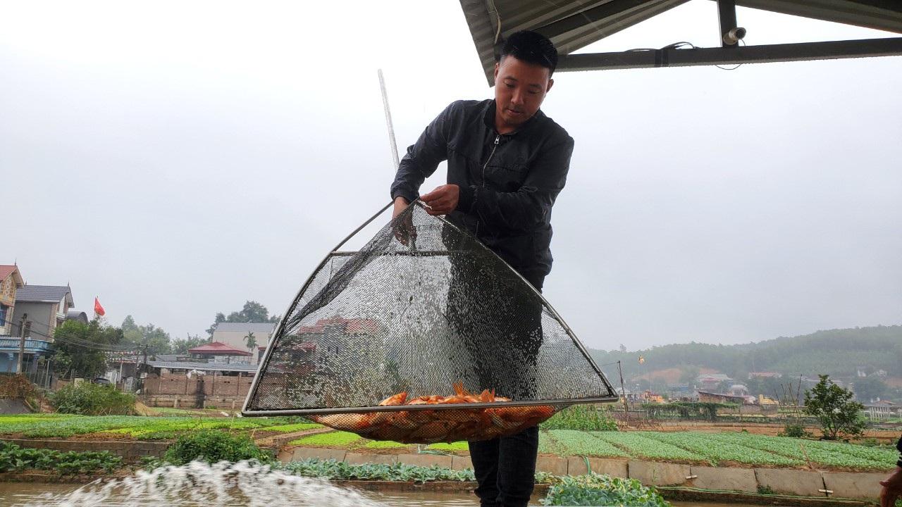 Tết ông Công, ông Táo: Người nuôi cá chép nhận đặt cọc hàng trăm triệu đồng - 5
