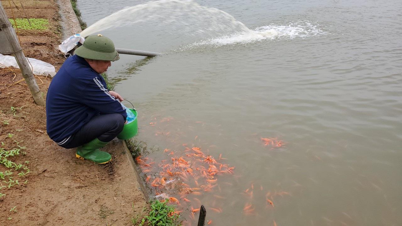 Tết ông Công, ông Táo: Người nuôi cá chép nhận đặt cọc hàng trăm triệu đồng - 9