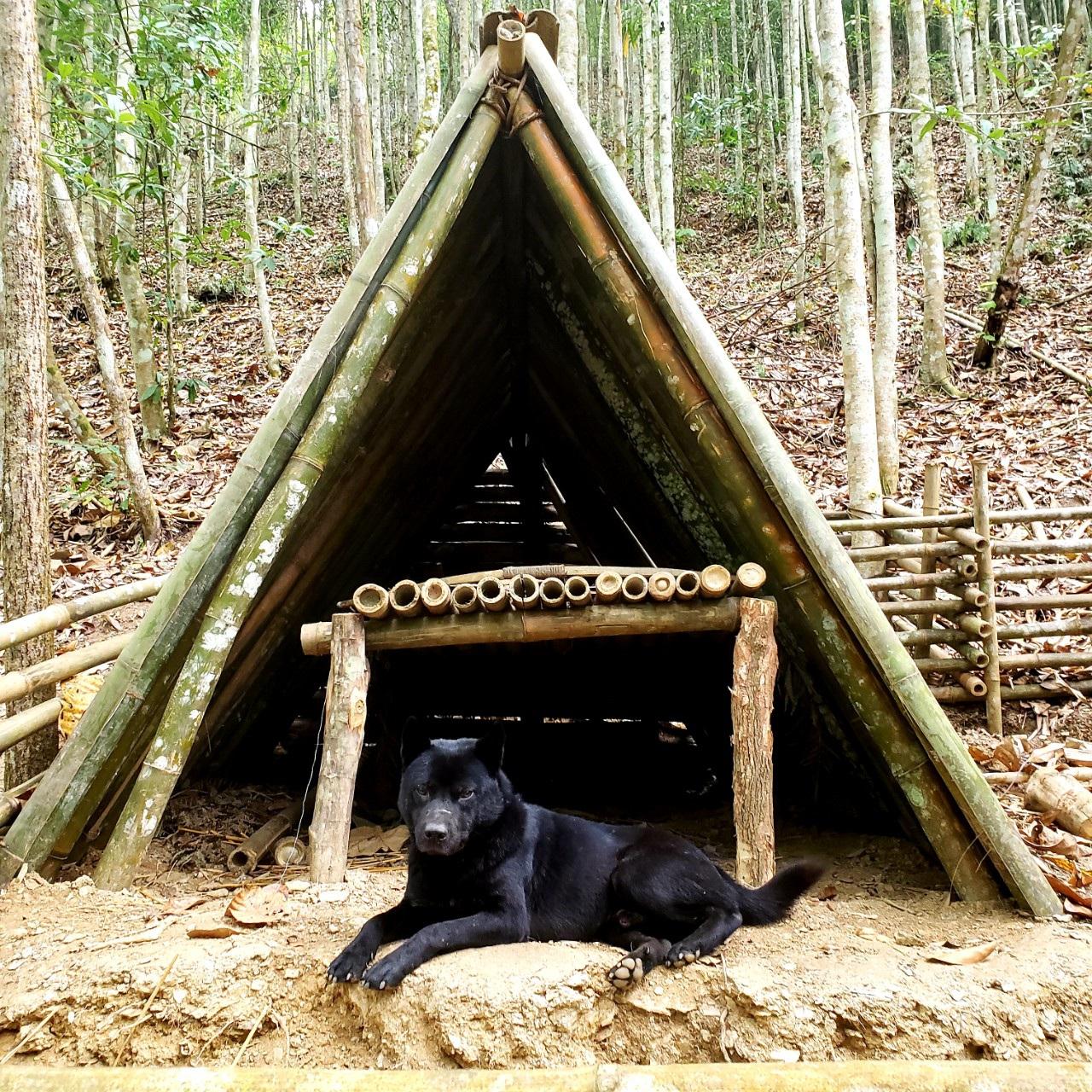 Chàng trai bỏ phố lên rừng: Nướng cá trên đá, luộc trứng trong ống nứa - 6
