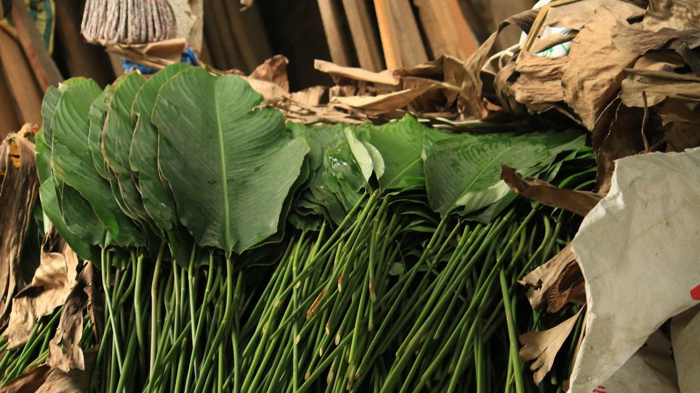 Ngôi làng cổ 400 năm trồng lá dong ở Hà Nội, người dân hái lá đếm tiền - 6