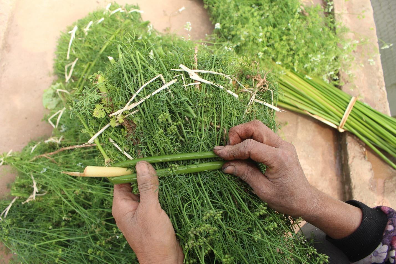 Ngôi làng Hà Nội trồng loại cây giải xui, chỉ thu hoạch 5 ngày cận Tết - 5