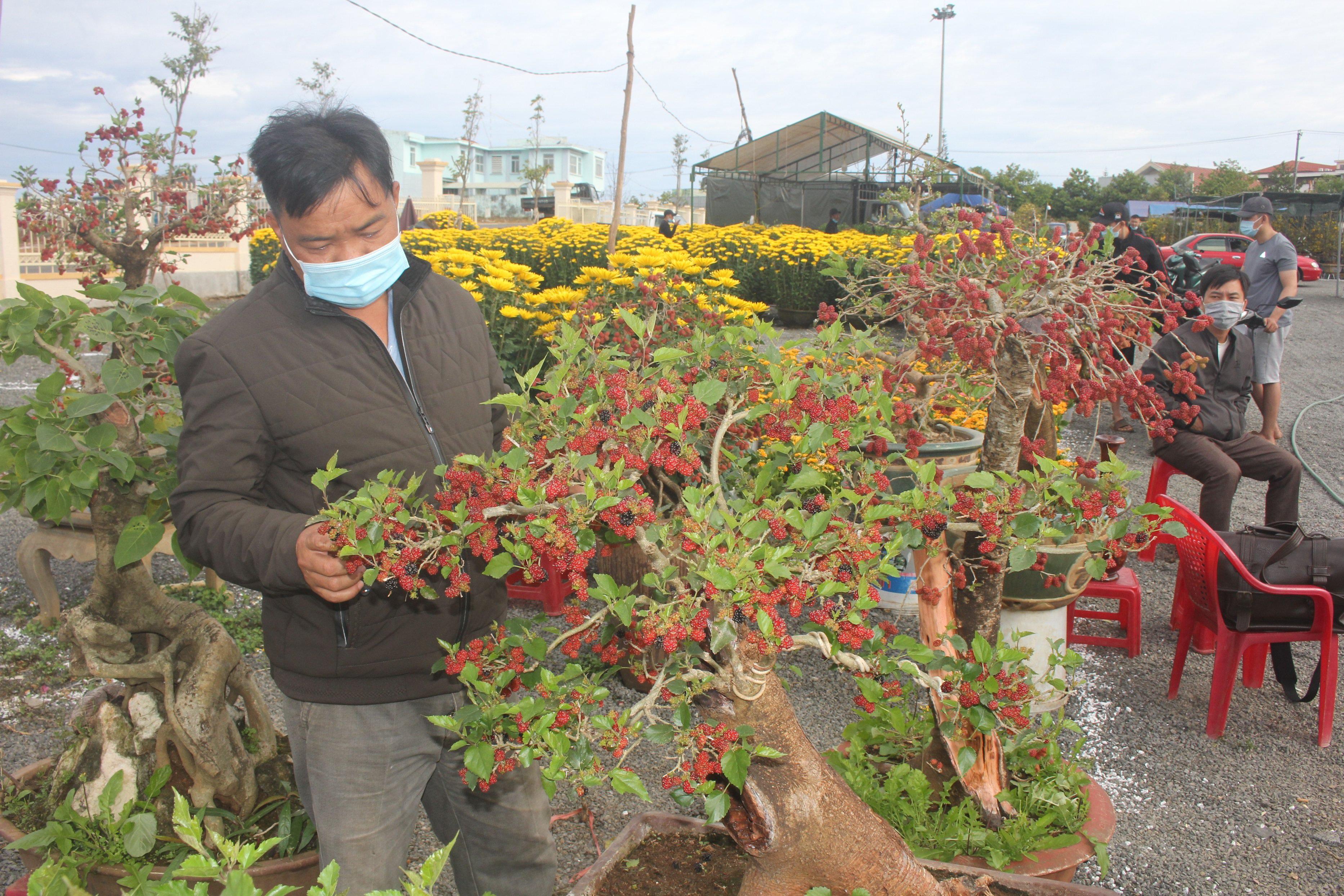 Cây dâu tằm nhuộm đỏ quả chín độc đáo hút khách chợ xuân - 1