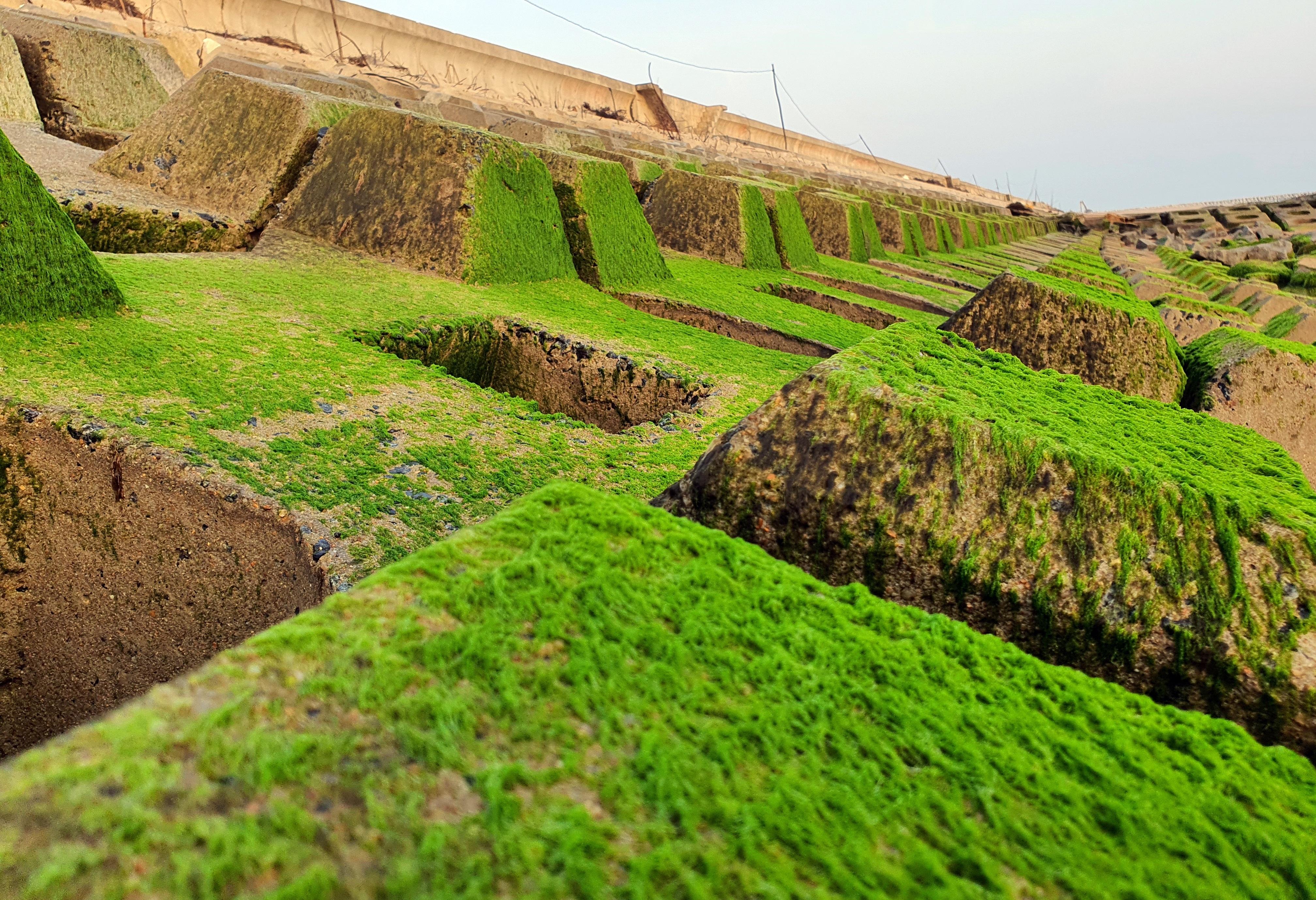 Du khách đổ xô check-in bãi đá rêu xanh đẹp nhất Phú Yên - 9