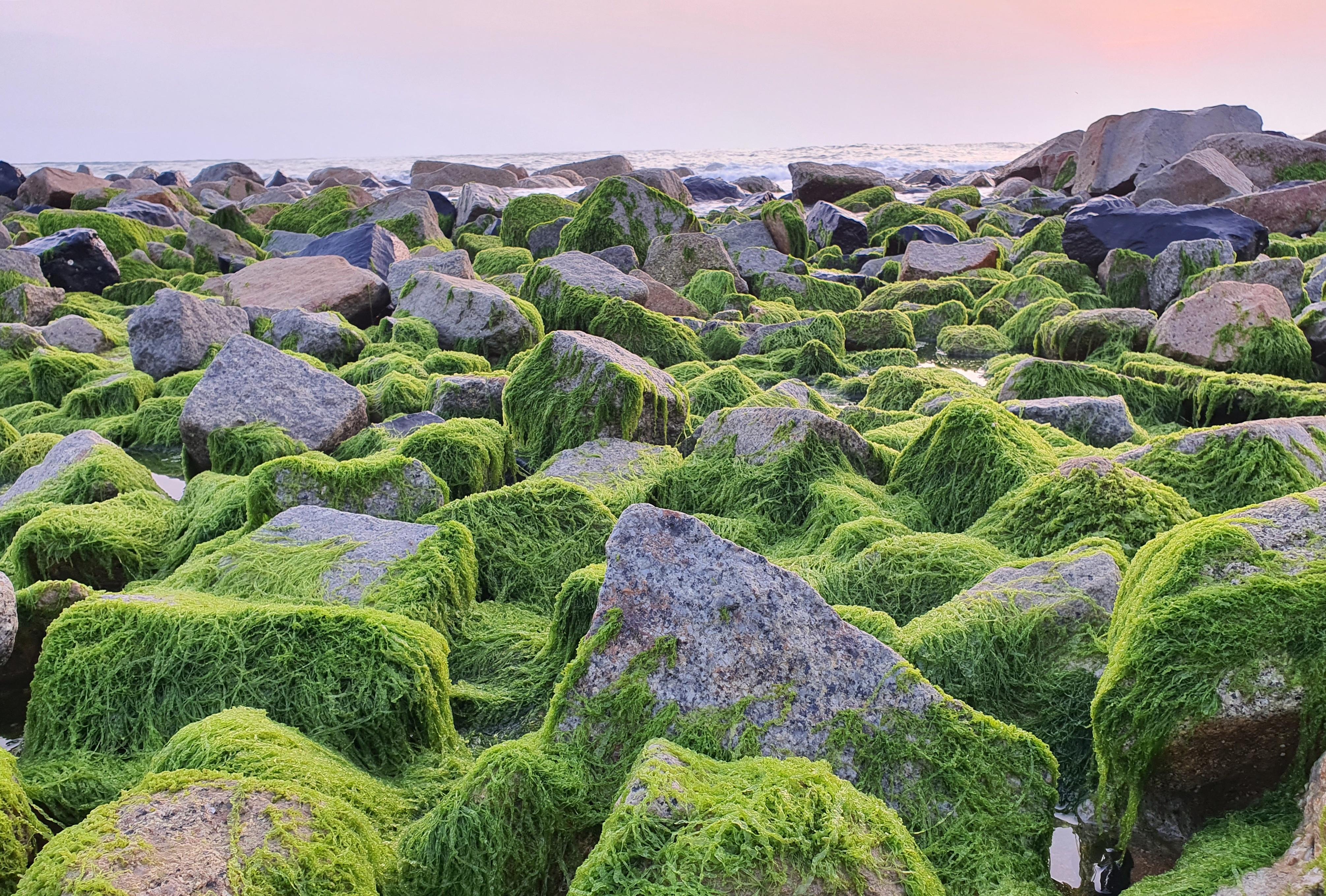 Du khách đổ xô check-in bãi đá rêu xanh đẹp nhất Phú Yên - 2