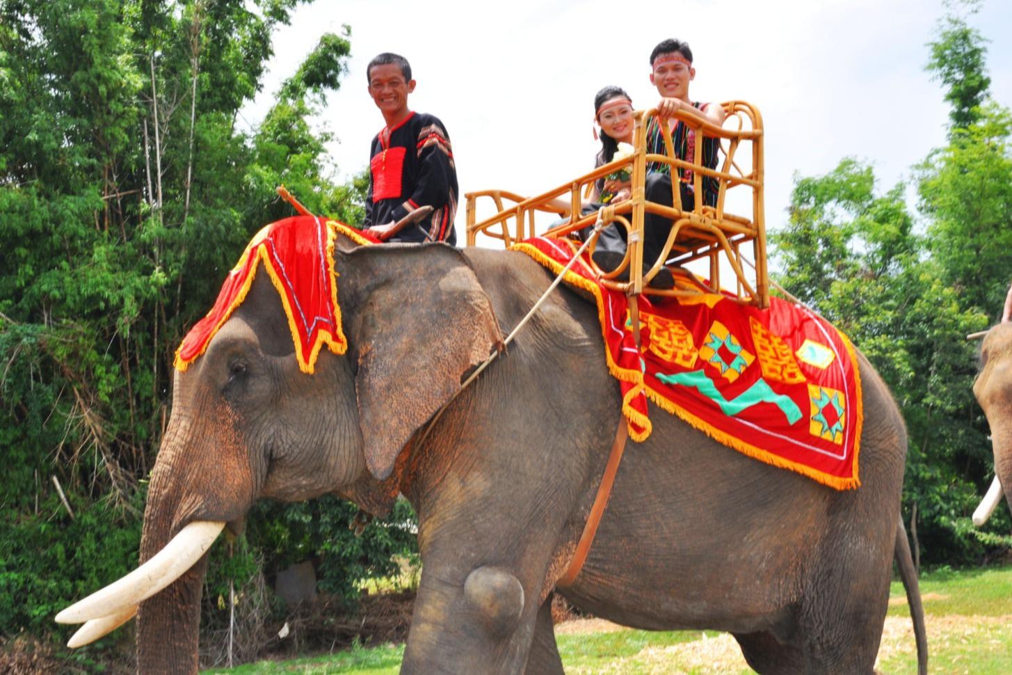 Độc đáo lễ bắt rể cho con gái bằng 14 chú voi khủng ở Tây Nguyên - 2