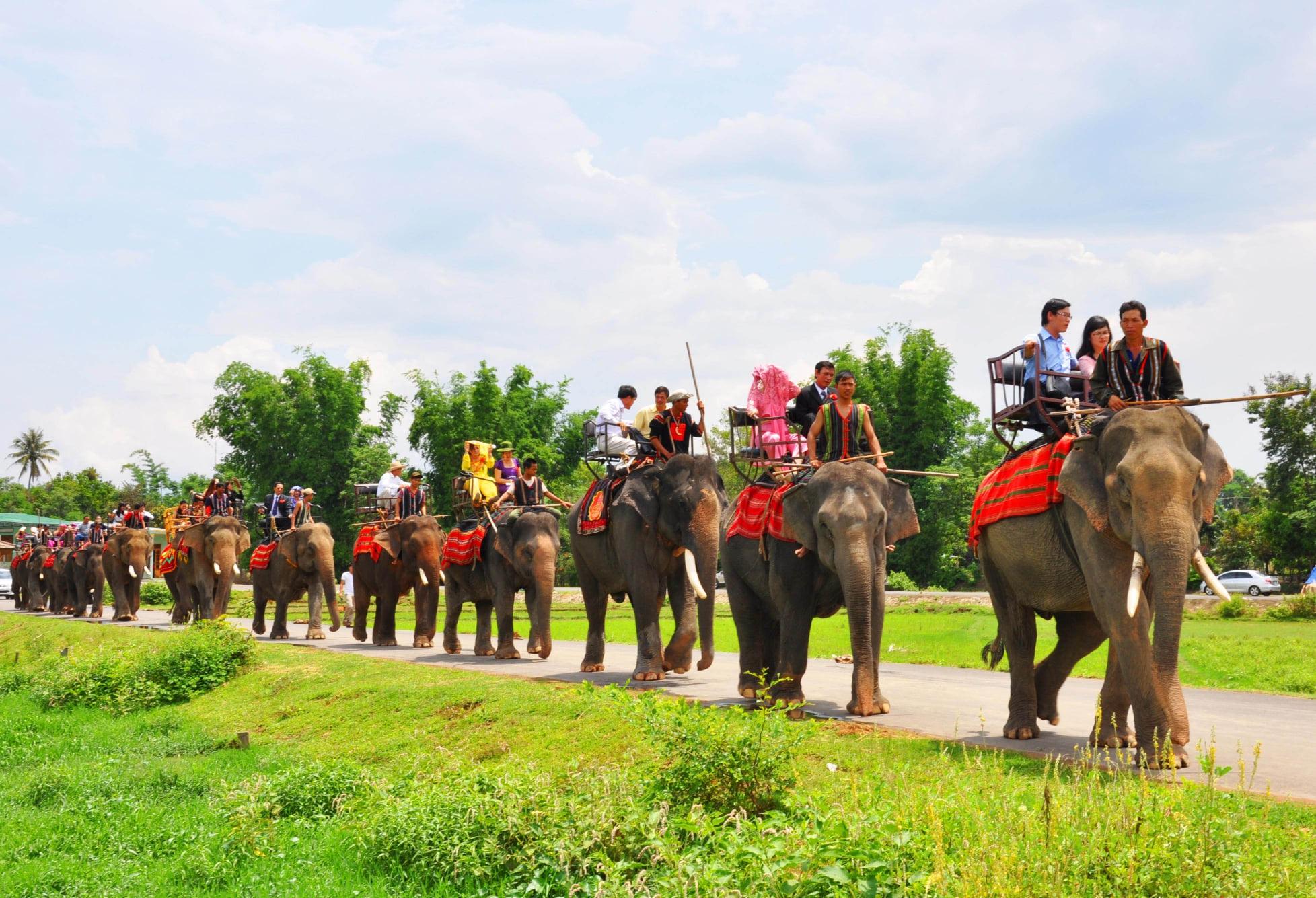 Độc đáo lễ bắt rể cho con gái bằng 14 chú voi khủng ở Tây Nguyên - 1