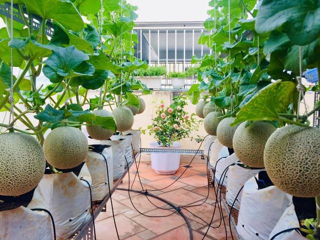 Cảnh trồng rau, nuôi gà, thả cá trên sân thượng của những nông dân phố - 1